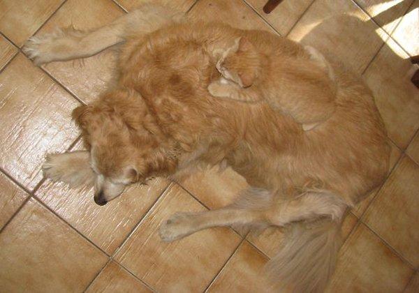 camo-cats-golden