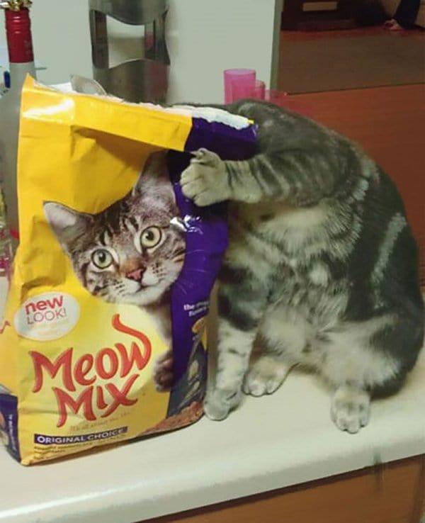 camo-cats-meow-mix