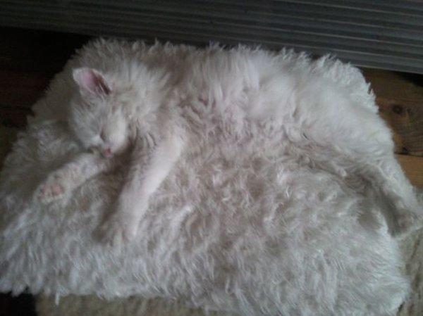 camo-cats-rug