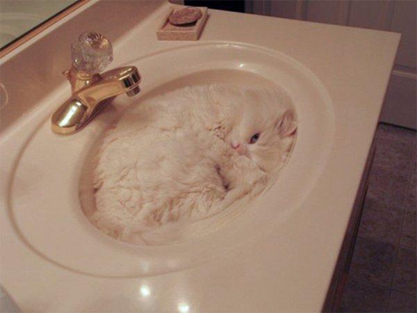 camo-cats-sink