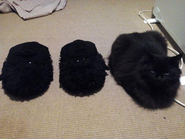 camo-cats-slipper
