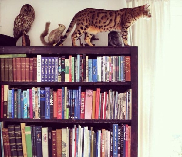 camo-cats-taxidermy
