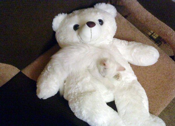 camo-cats-teddy
