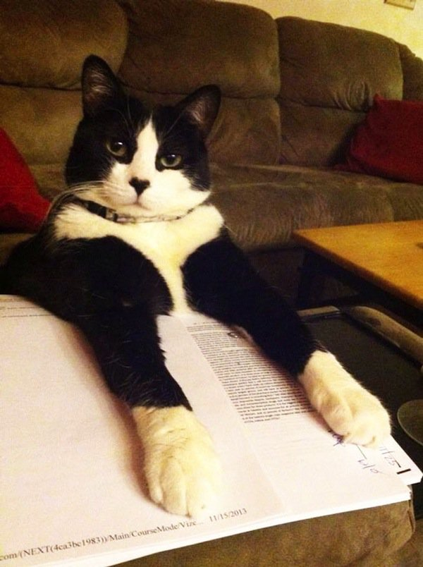 cats-black-white