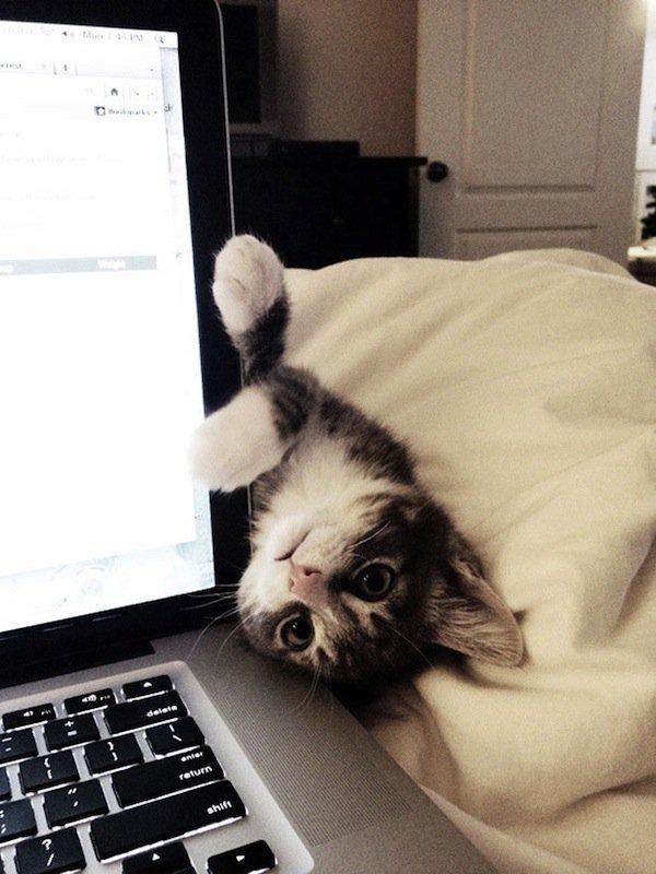cats-computer