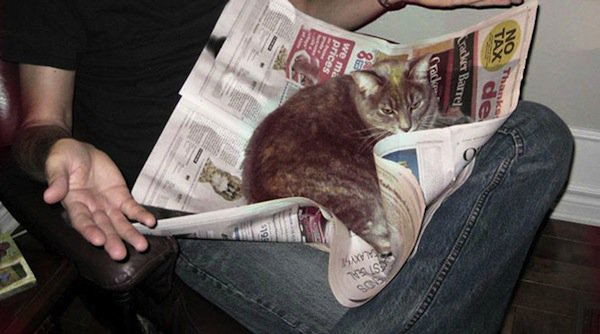 15 Cats Interrupting Reading Time With Their Cuteness