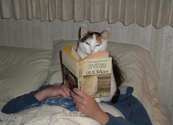 cats-tolkien