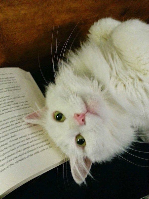 cats-white-cute