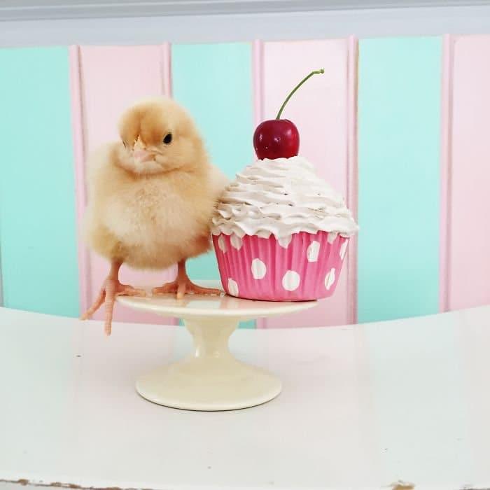 chick cake stand cupcake cherry
