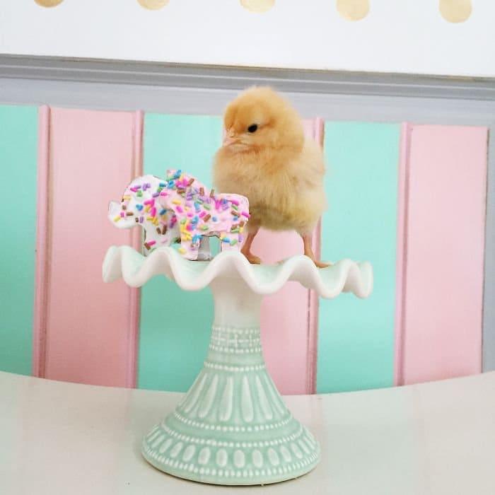 chick cake stand