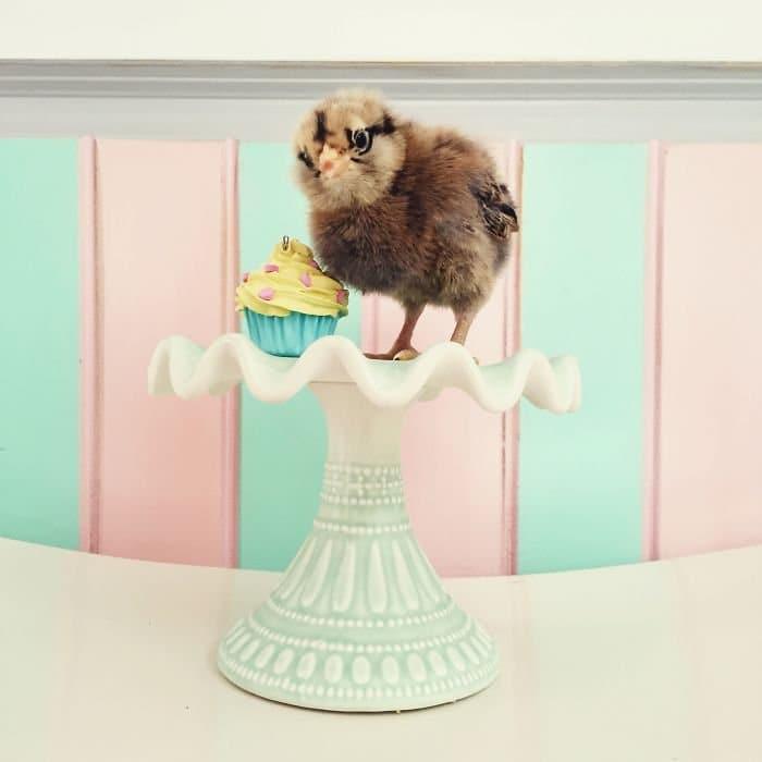 chick cupcake cake stand