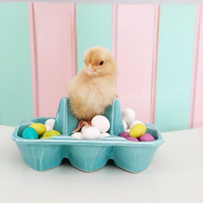 chick egg box candies