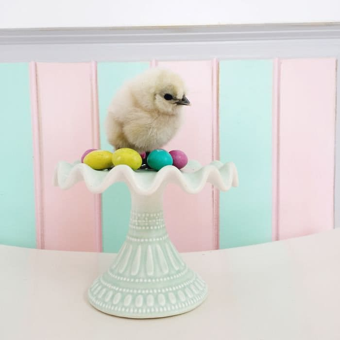 chick eggs cake stand