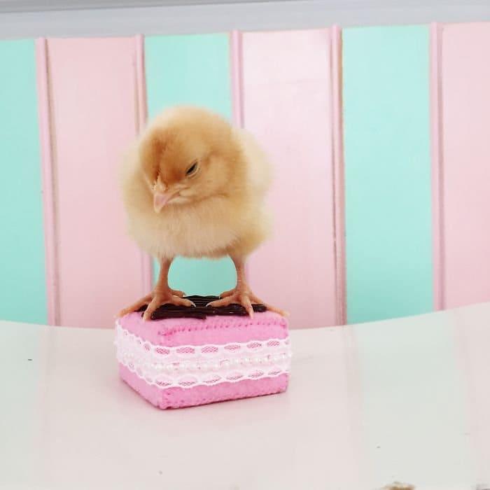 chick fake cake