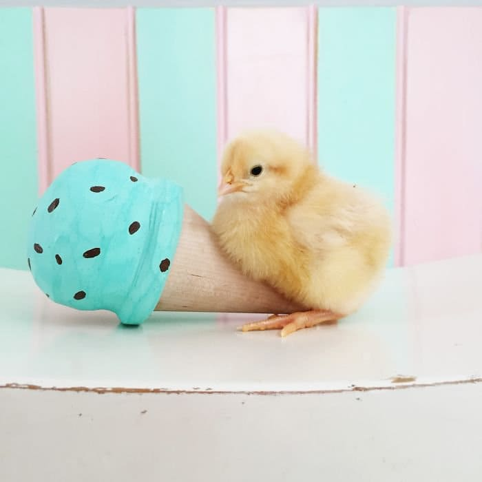 chick ice cream