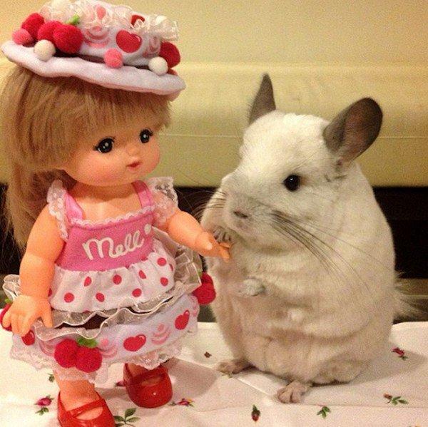 chinchilla doll