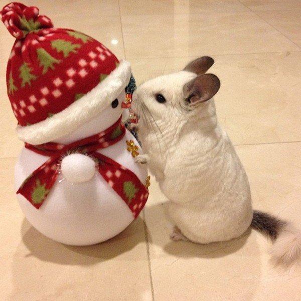 chinchilla snowman