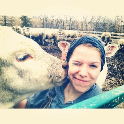 cow-ears