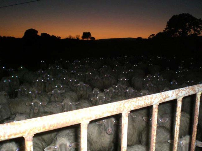creepy-images-herd