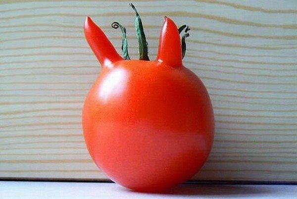 devil tomato