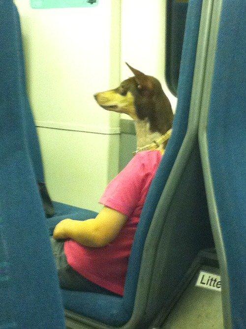 dog-clothed