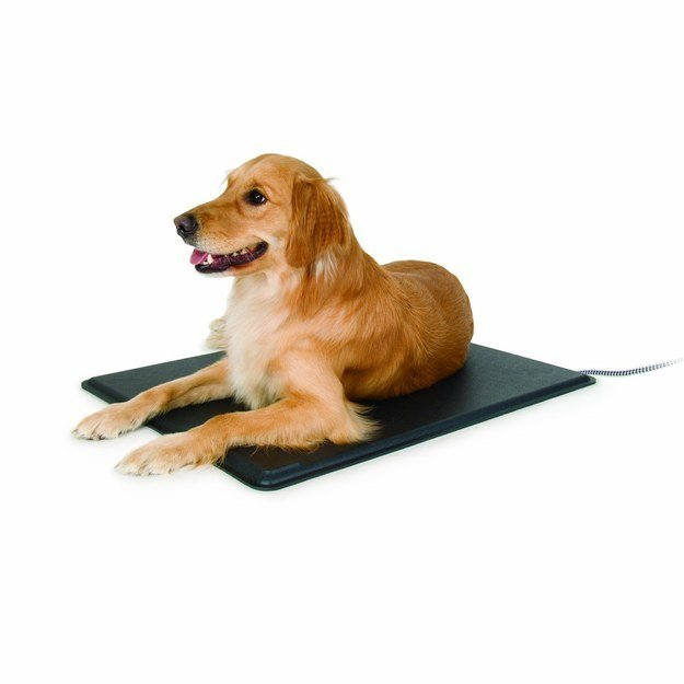 dog laying on heated mat