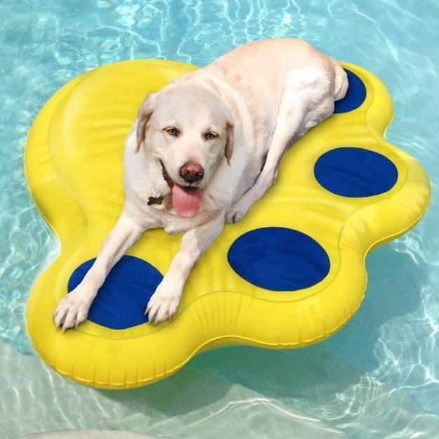 dog laying on puncture proof float