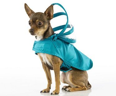dog raincoat jacket