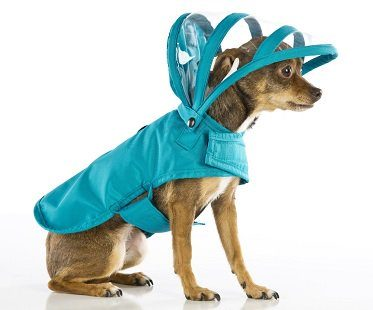 dog raincoat jacket teal