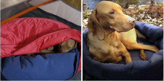 a dog inside sleeping bag