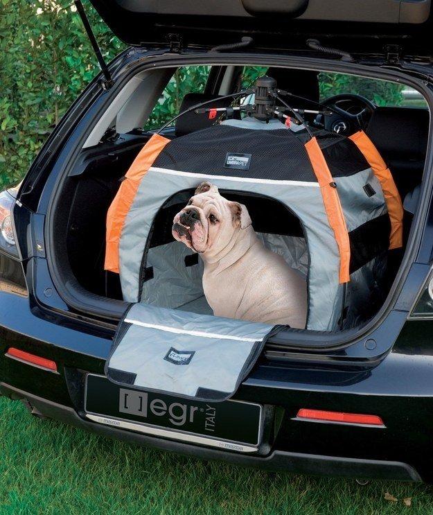 a dog inside dog tent