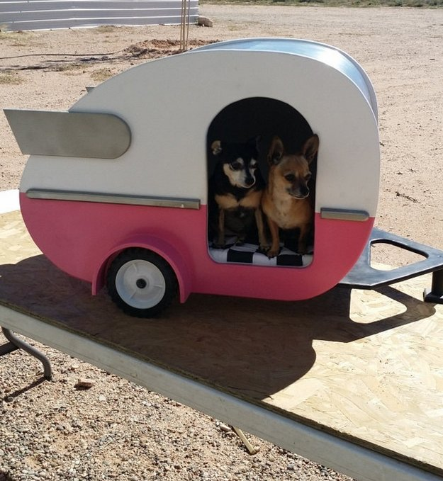 two dogs inside a camper van trailer