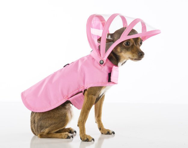 dog wearing rain coat with hood