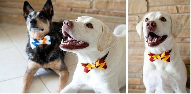 doggie-bow-tie