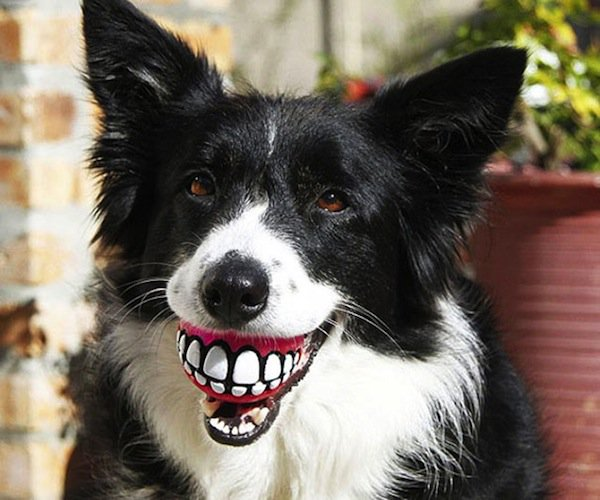 dogs-grin
