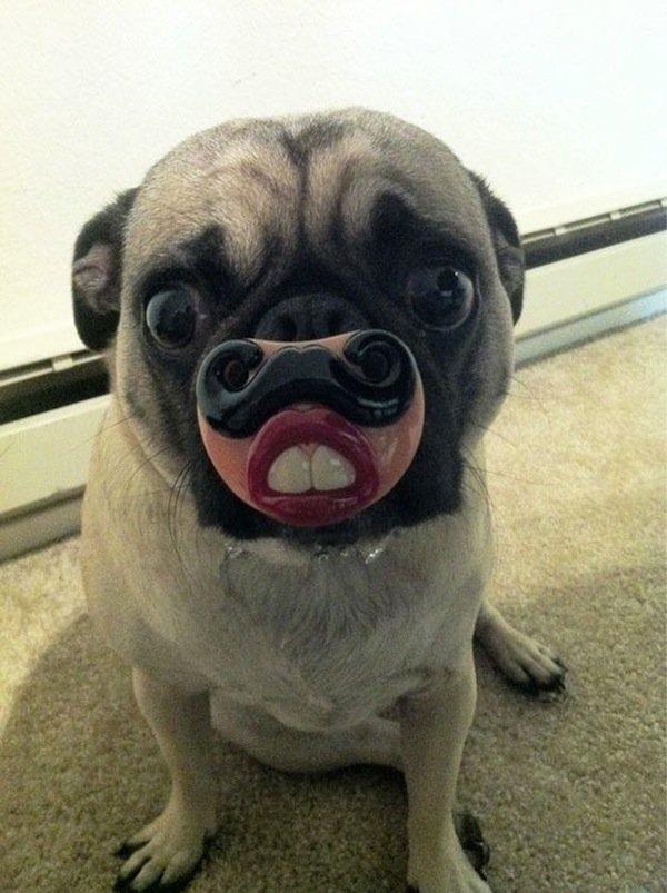 dogs-teeth