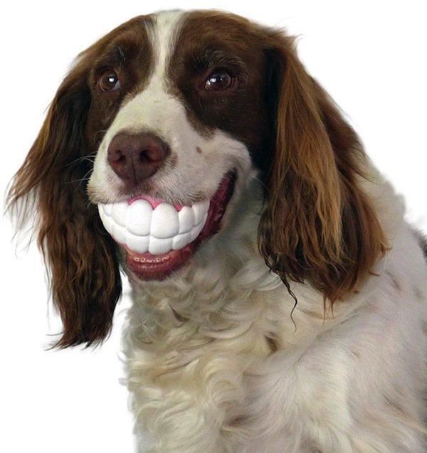 dogs-teethy