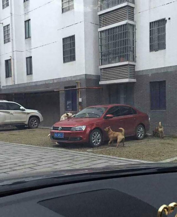 dogs-trash-car-revenge