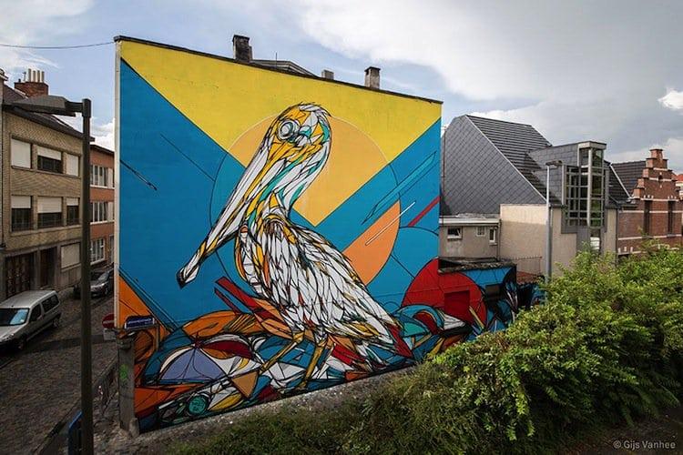 dzia-pelican