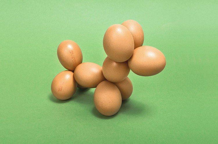 egg puppy