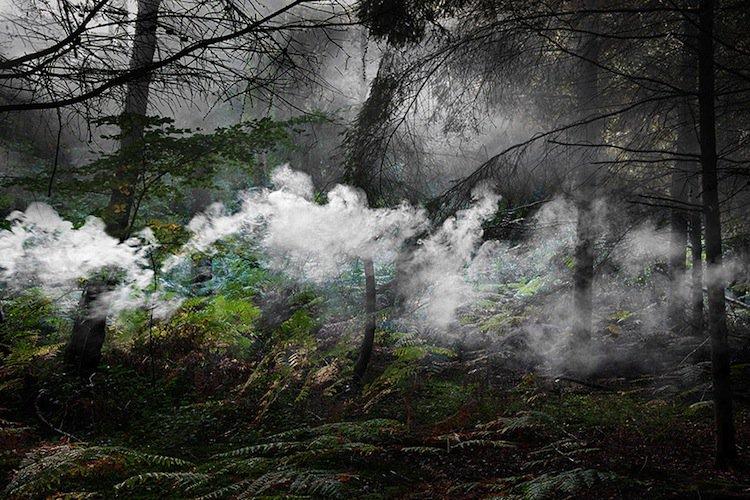 forest-cloud