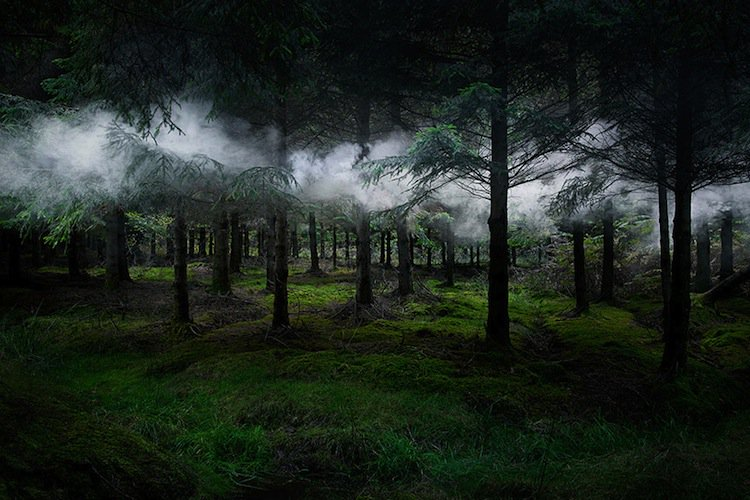 forest-first