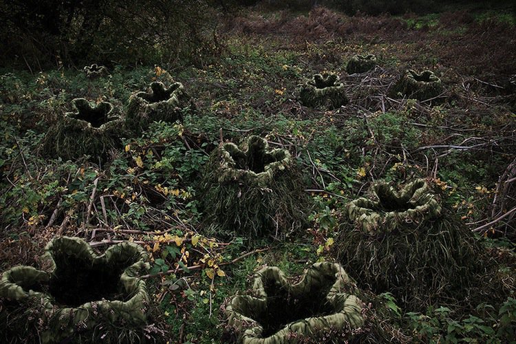 forest-holes