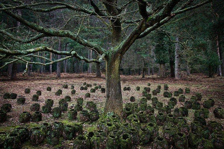 forest-pots