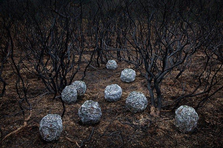 forest-rocks