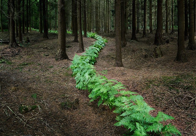 forest-row