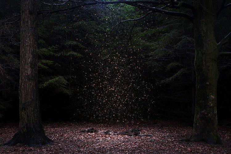forest-sprinkle