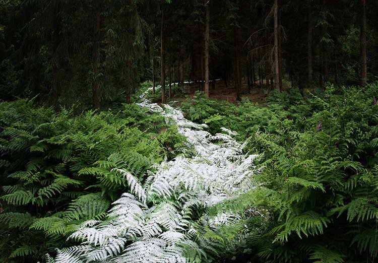 forest-white