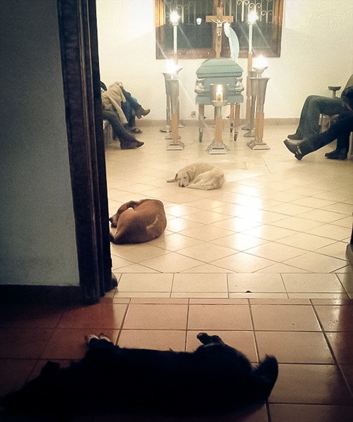 funeral-dogs