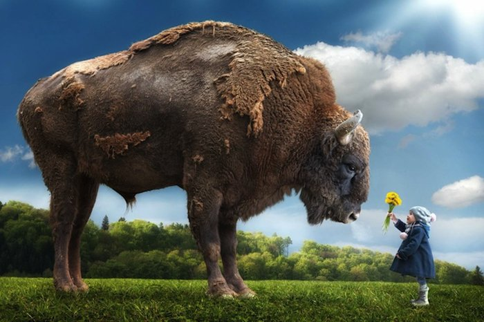 john-wilhelm-buffalo